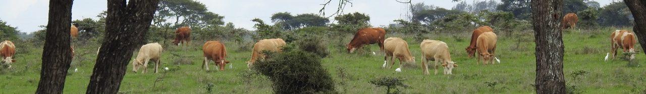 Rimpa Estates Wildlife Conservancy